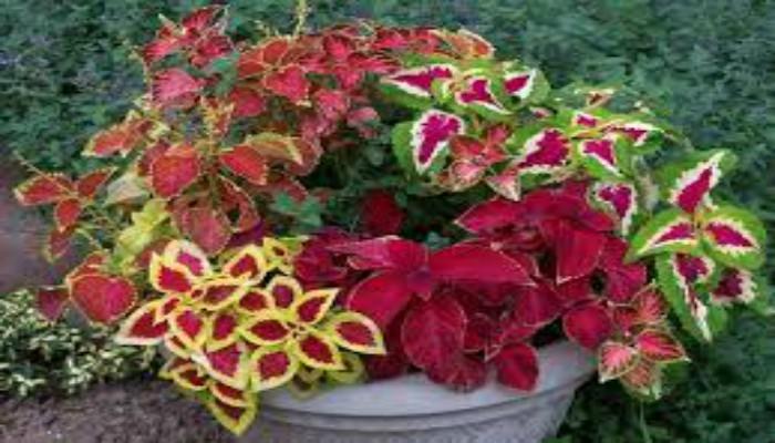 Plantas para decorar cocinas